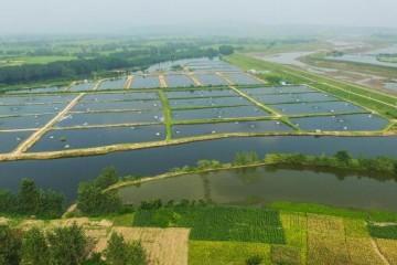 2020年水产养殖扶持政策是怎样的?补偿标准是多少?
