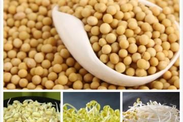豆芽种植:家庭简易种植方法,记住这五点就够了!