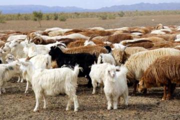 专业人士介绍养羊八禁忌中对于养殖户养羊温度的误区