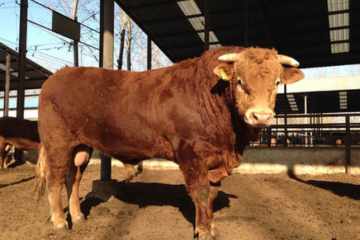 养殖户最近一段时间比较关心养20头牛国家补贴多少