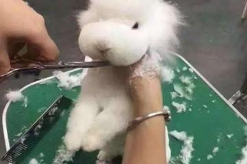 长毛兔采毛方法